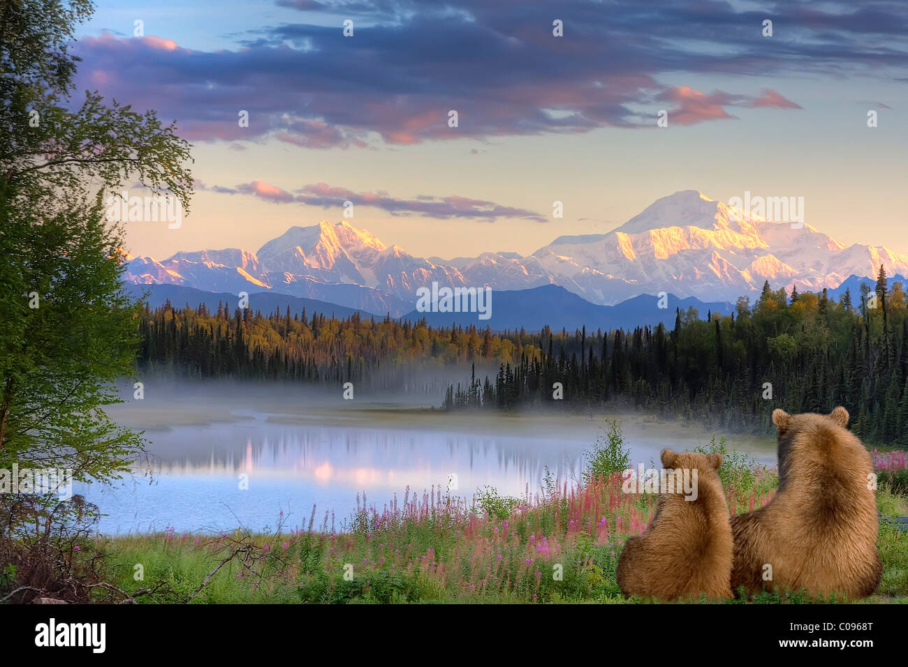 Sow and Cub brown bears looking across small lake and viewing Mt. McKinley at sunrise, SouthCentral Alaska, Autumn, - Stock Image