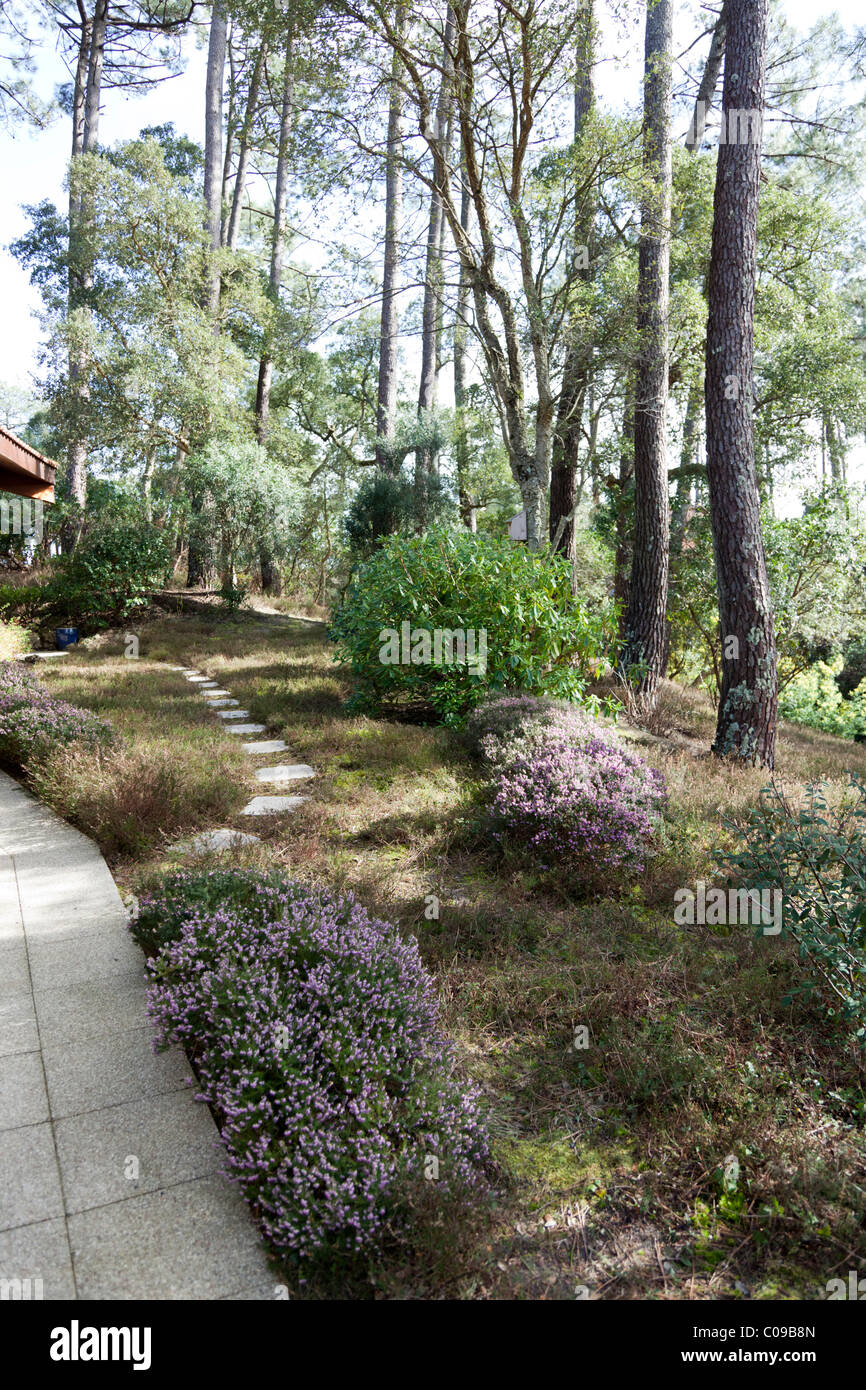 In front of a pavilion, a plot of ground with recently trimmed heathers (France). Parcelle de terrain avec des bruyères - Stock Image