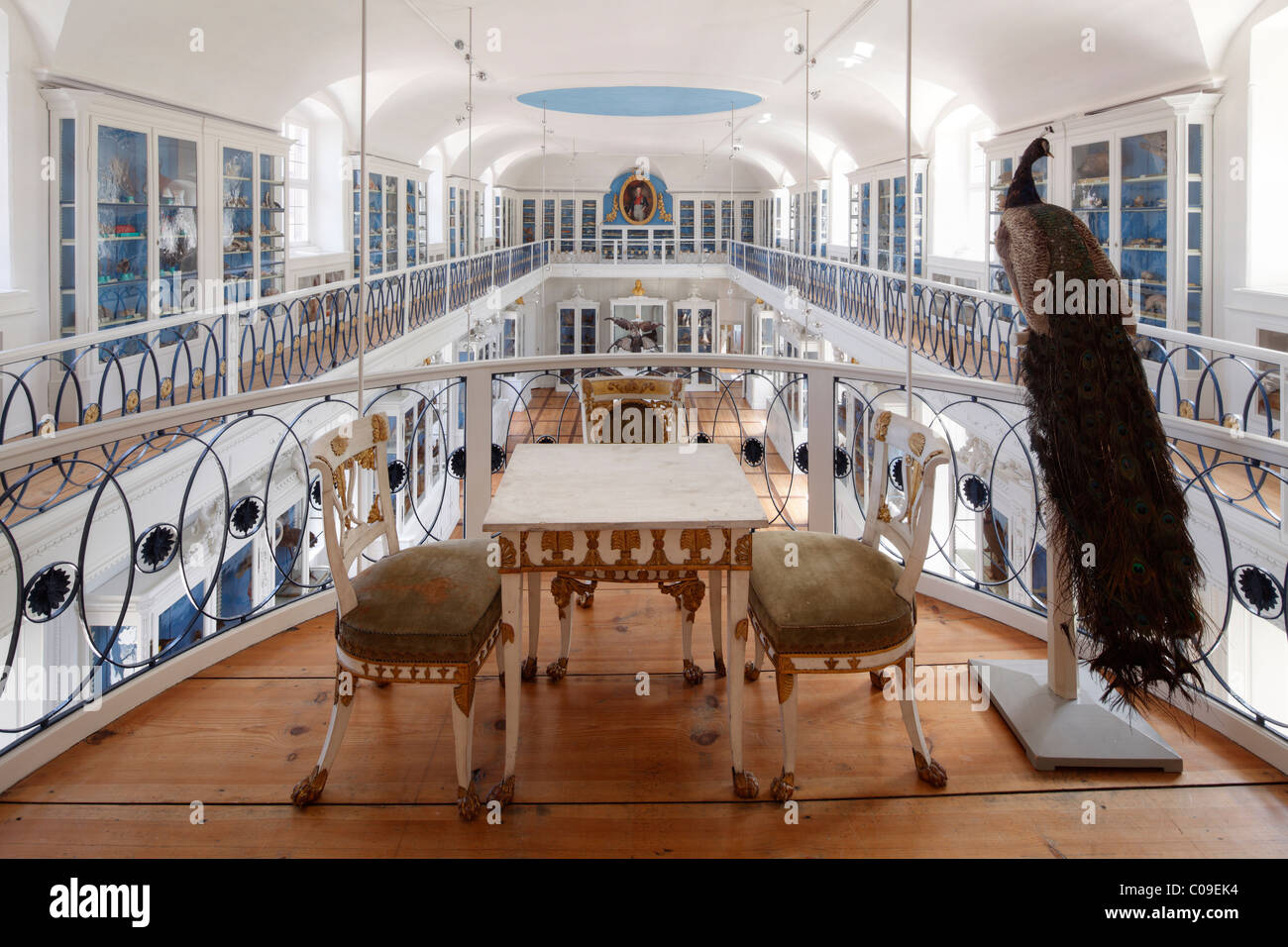 Historical exhibition hall in the Museum of Natural History, Bamberg, Upper Franconia, Franconia, Bavaria, Germany, - Stock Image