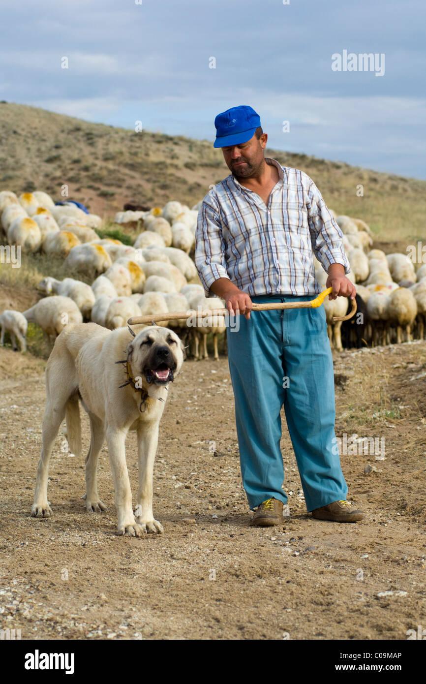 Shepherd with Anatolian shepherd dog, Kangal, Cappadocia, central Anatolia, Turkey, Asia - Stock Image