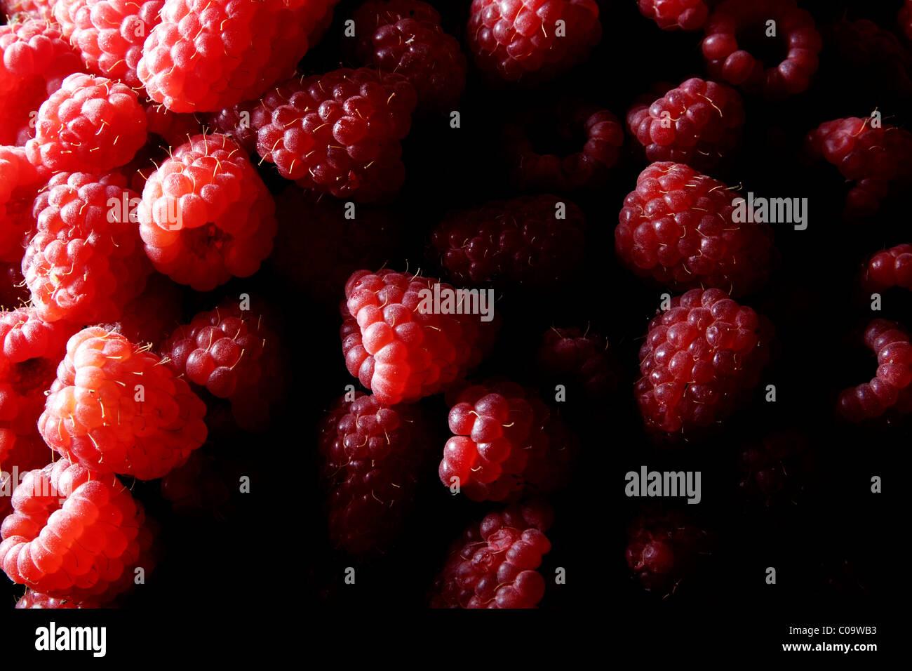 Raspberries (Rubus idaeus) - Stock Image