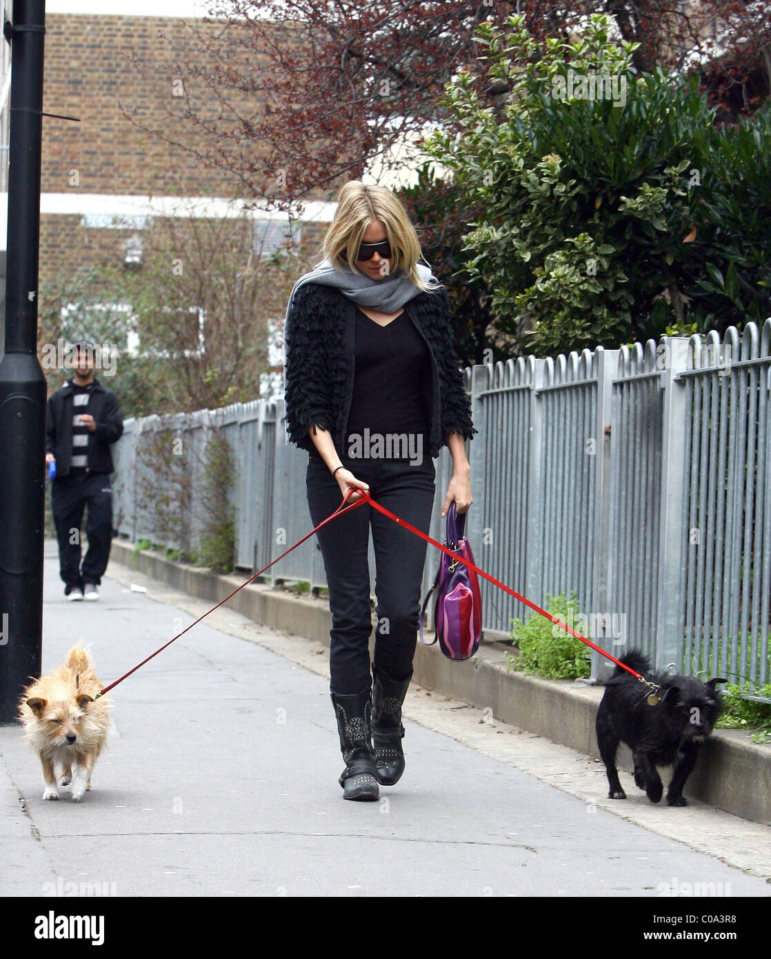 Dogs Home Near Rugeley: Paparazzi Dog Dogs Stock Photos & Paparazzi Dog Dogs Stock