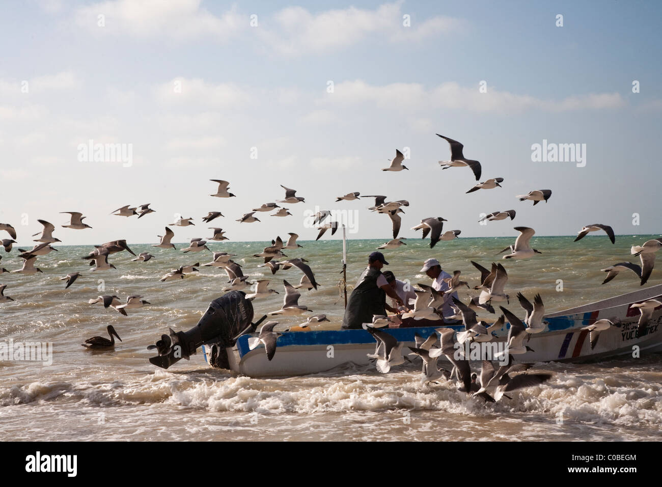 Fishermen returning with catch to Progreso, Yucatan, Mexico - Stock Image