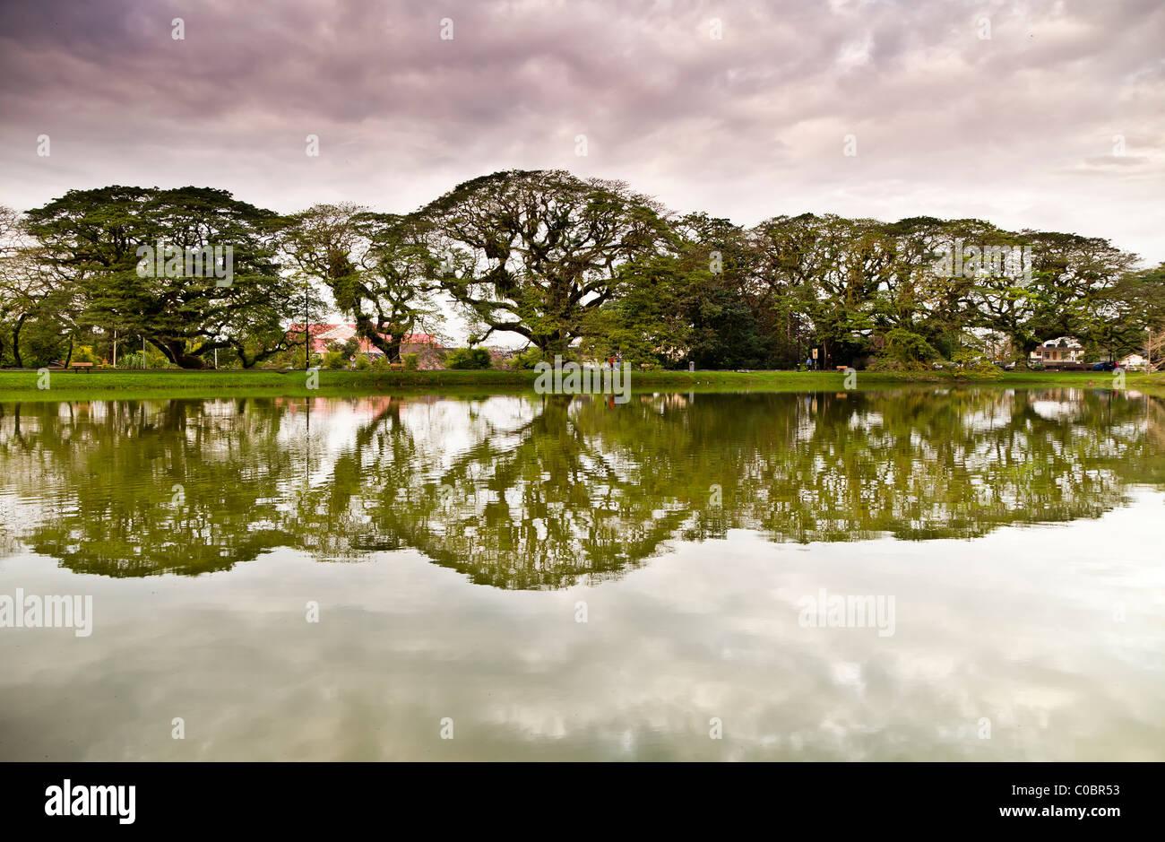 Rain-trees into infinity, Taiping - Stock Image