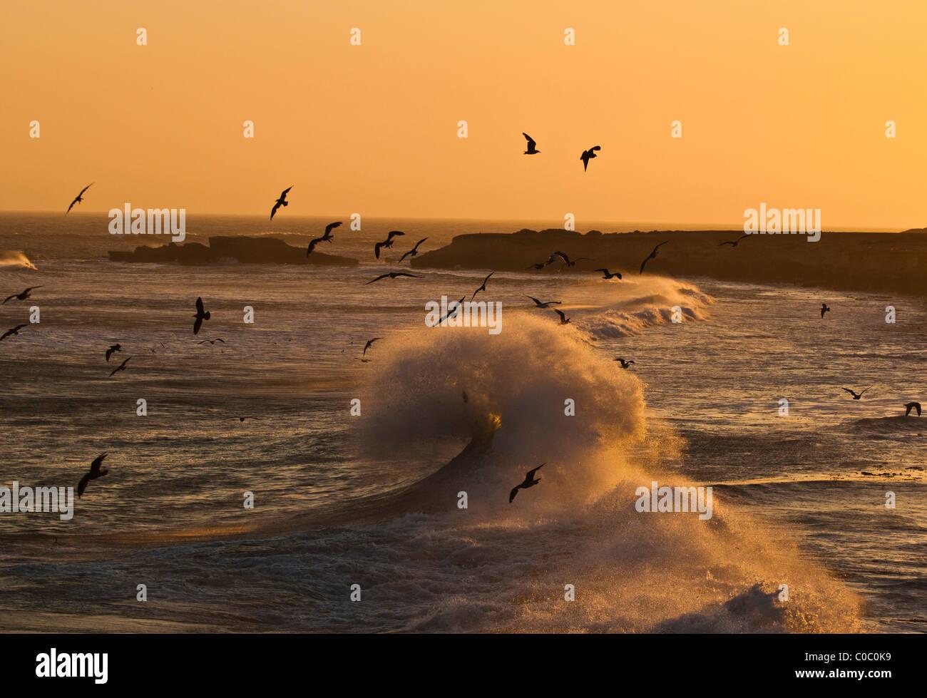 Seabirds, San Carlos, Baja California, Mexico - Stock Image