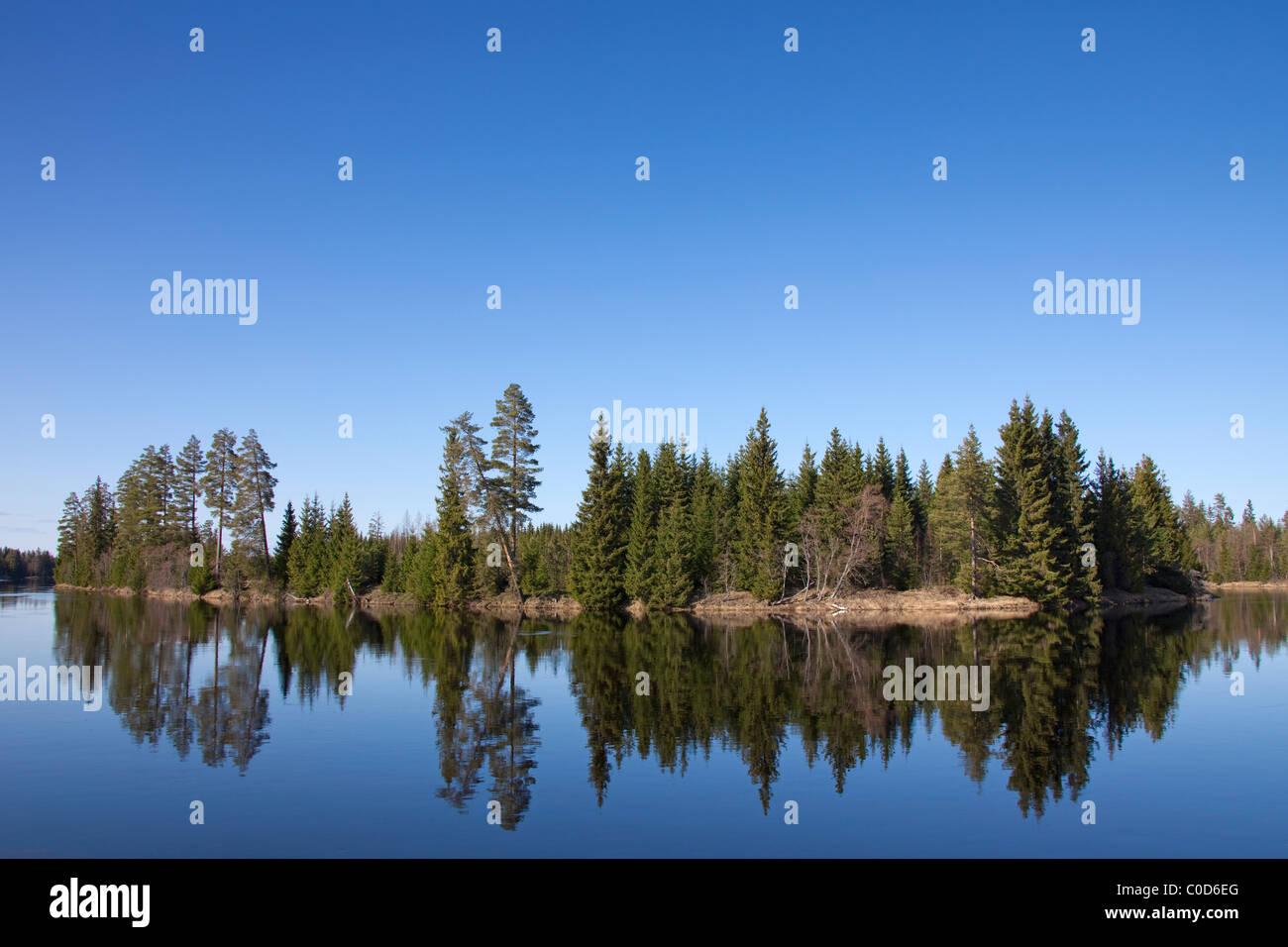Pine trees along the Västerdal River / Västerdalälven, Dalarna, Sweden - Stock Image