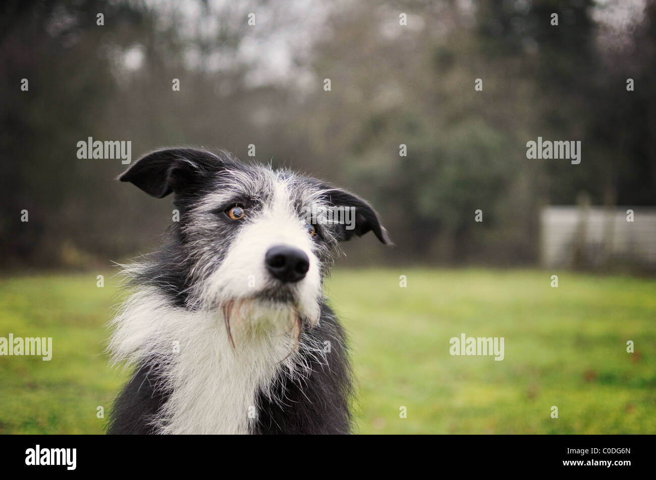 A dog sitting and waiting patiently - Stock Image