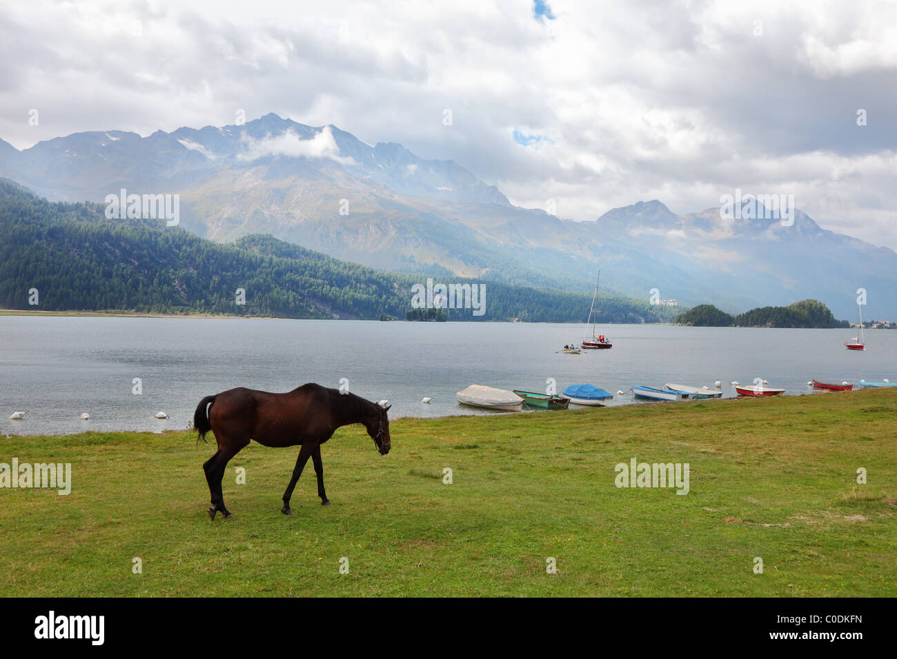Sleek thoroughbred bay horse grazing near the moored yachts - Stock Image