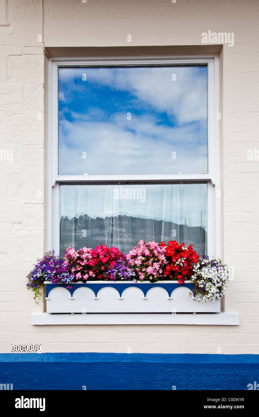 Colorful window box of flowers with reflection of blue sky in window - Stock Image