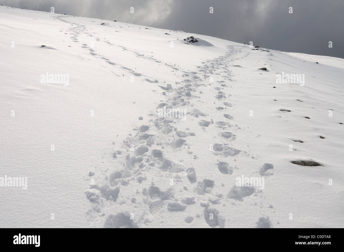 Footprints in the snow on Helvellyn in winter in the English Lake District - Stock Image