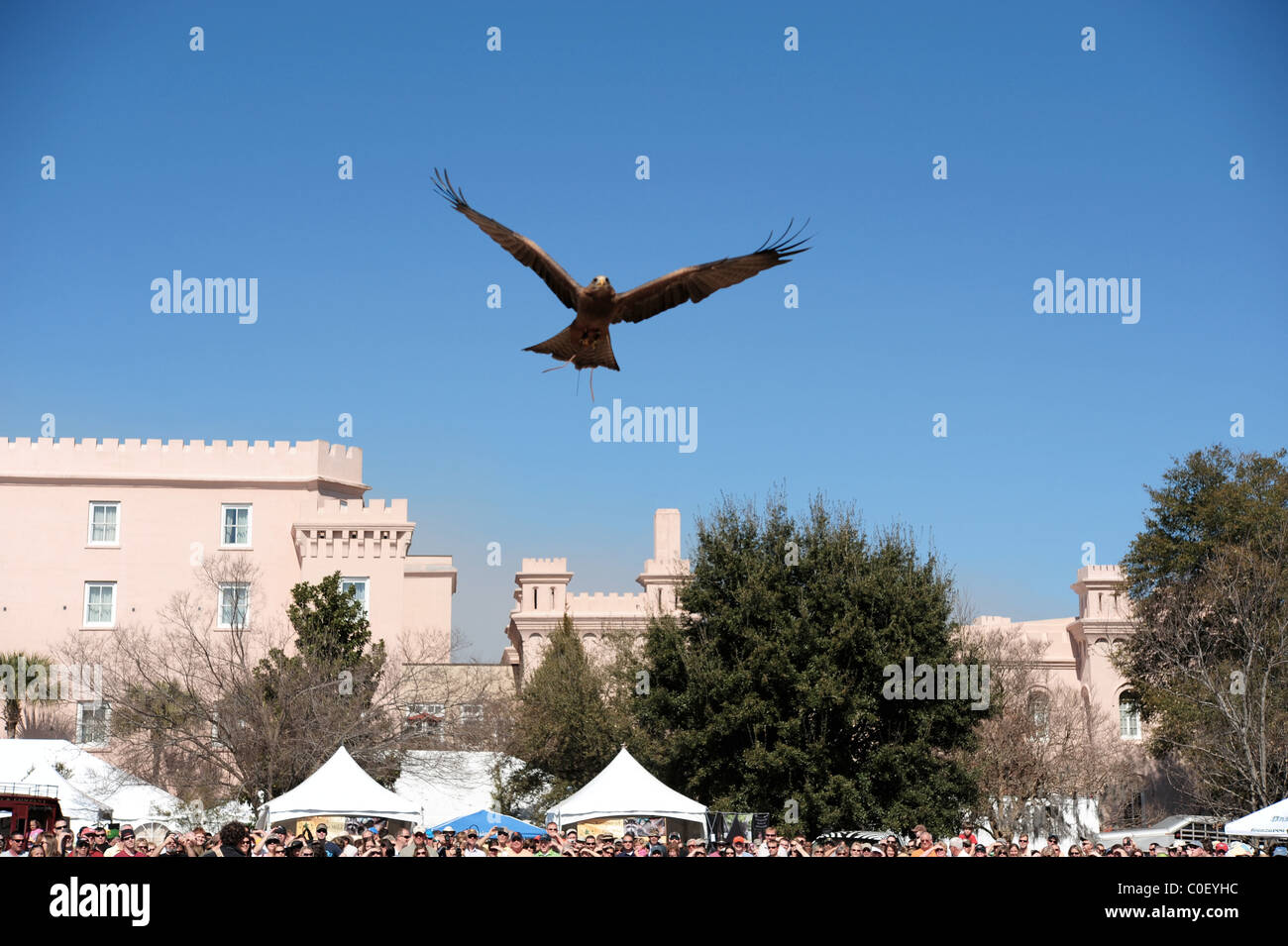 Tawny eagle in flight above spectators at birds of prey demonstration - Stock Image