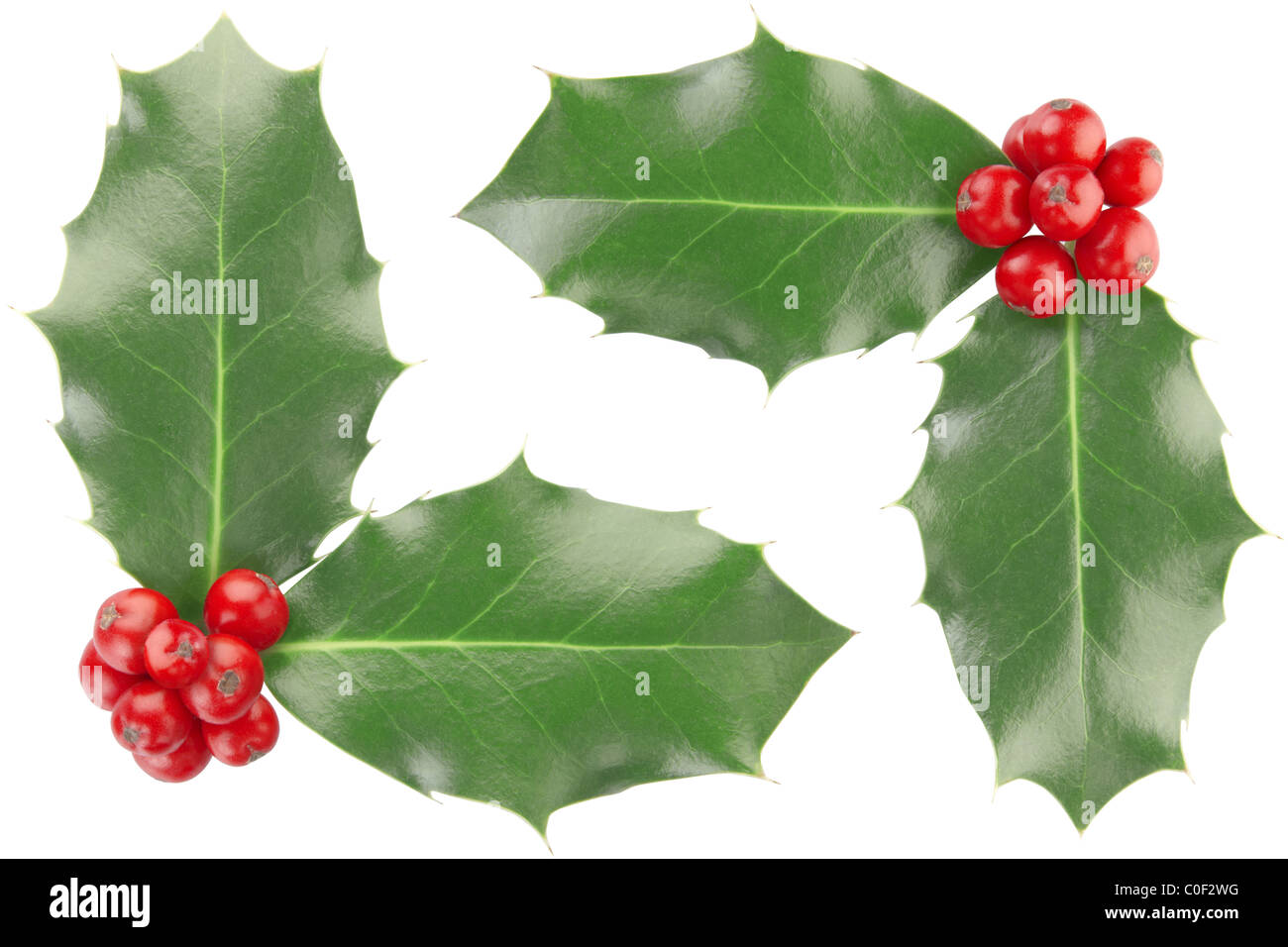 Holly corner isolated on white, clipping path included - Stock Image