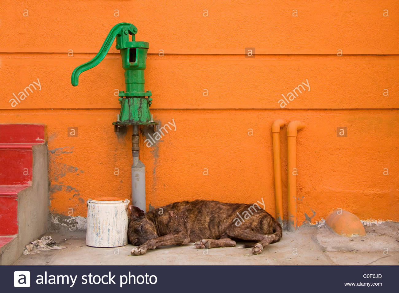 Dog sleeping on the street in front of an orange house with red steps and green water pump in South India - Stock Image