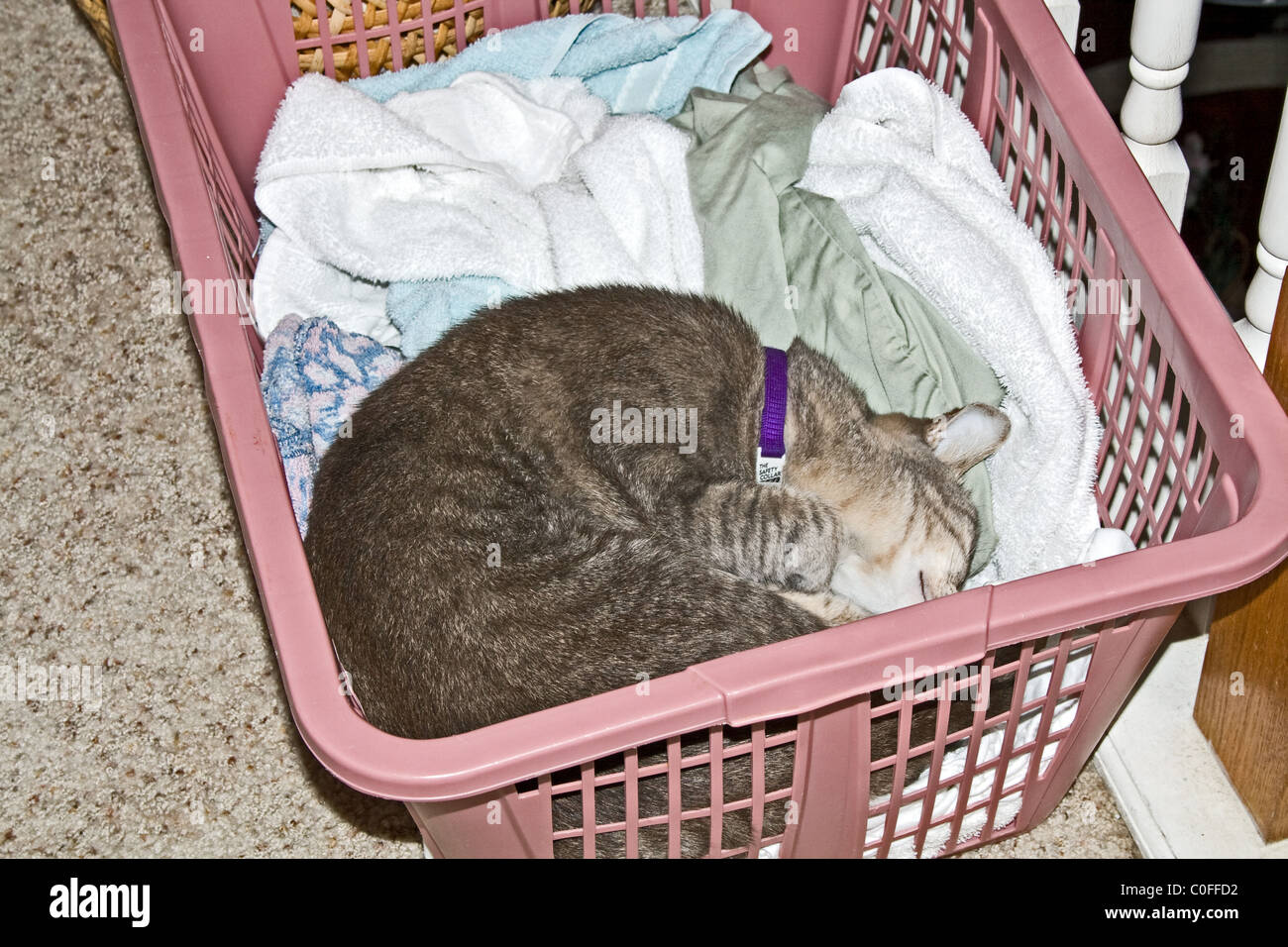 cat sleeping among the clothes in a laundry basket stock photo