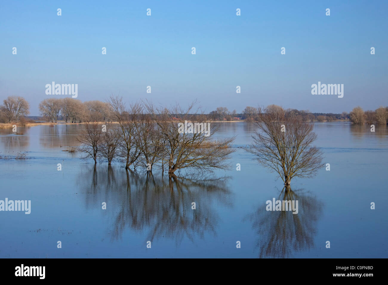 Flooded meadows at the Elbe River Landscape Biosphere Reserve, Niedersachsen, Germany - Stock Image