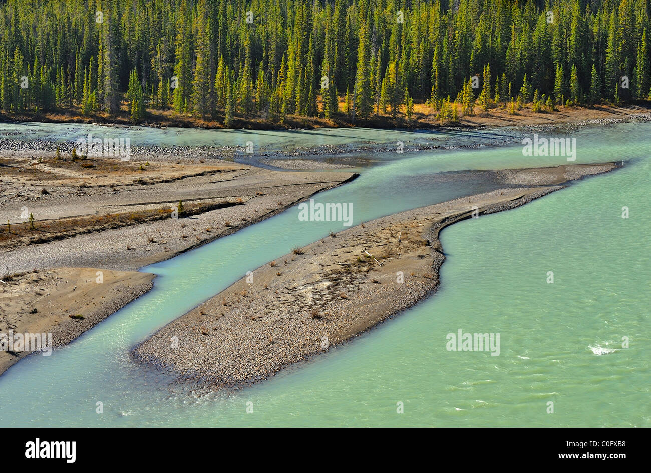 An island of sand formed by the glacier fed Athabasca river in Jasper National Park Alberta Canada. - Stock Image