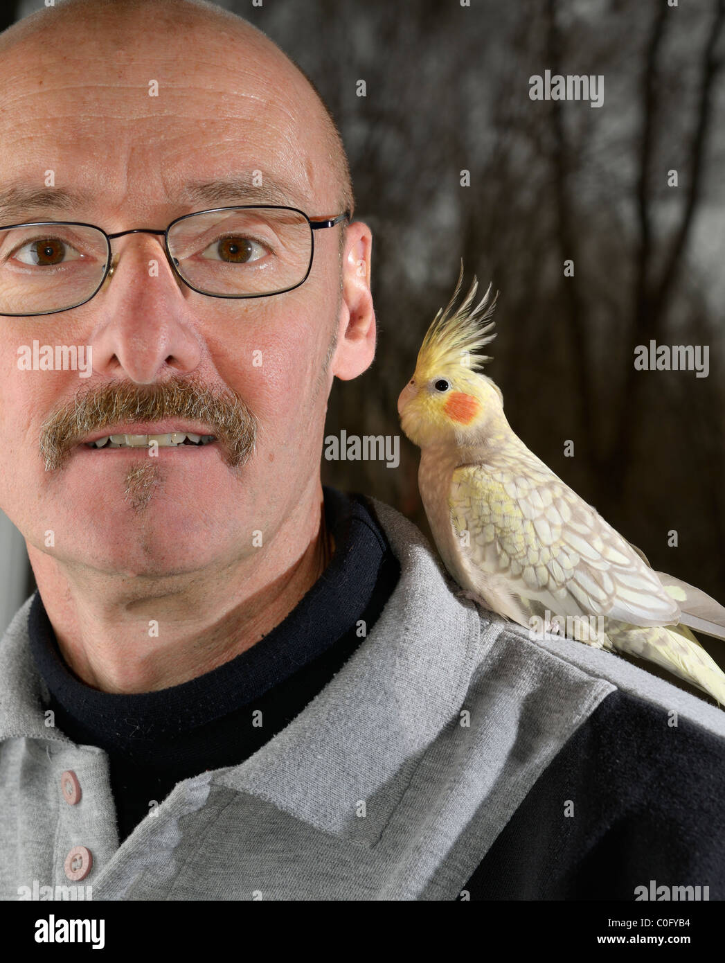 Man with a pet juvenile female Pearl Cockatiel with raised crest on his shoulder - Stock Image