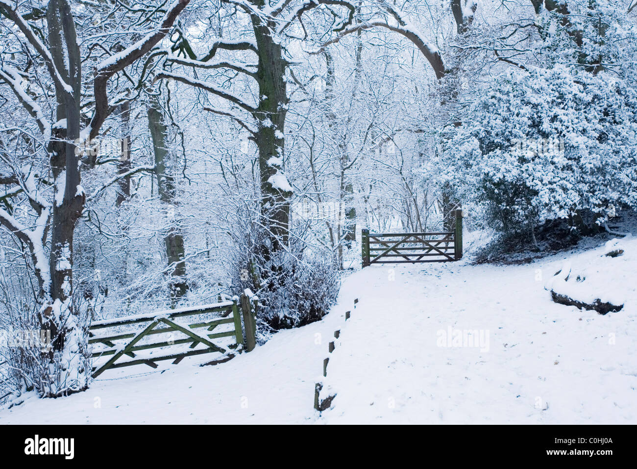 Gates in Kings Wood. Winter. The Mendips. Somerset. England. UK. - Stock Image
