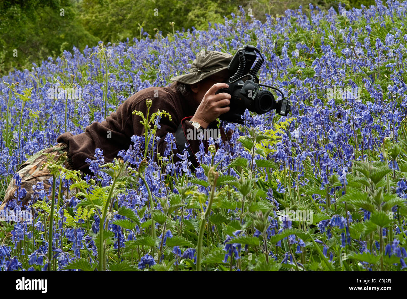 Man photographing amongst bluebells (Endymion non-scriptus) flowers Ghyll Woods Dufton Lake District Cumbria England - Stock Image