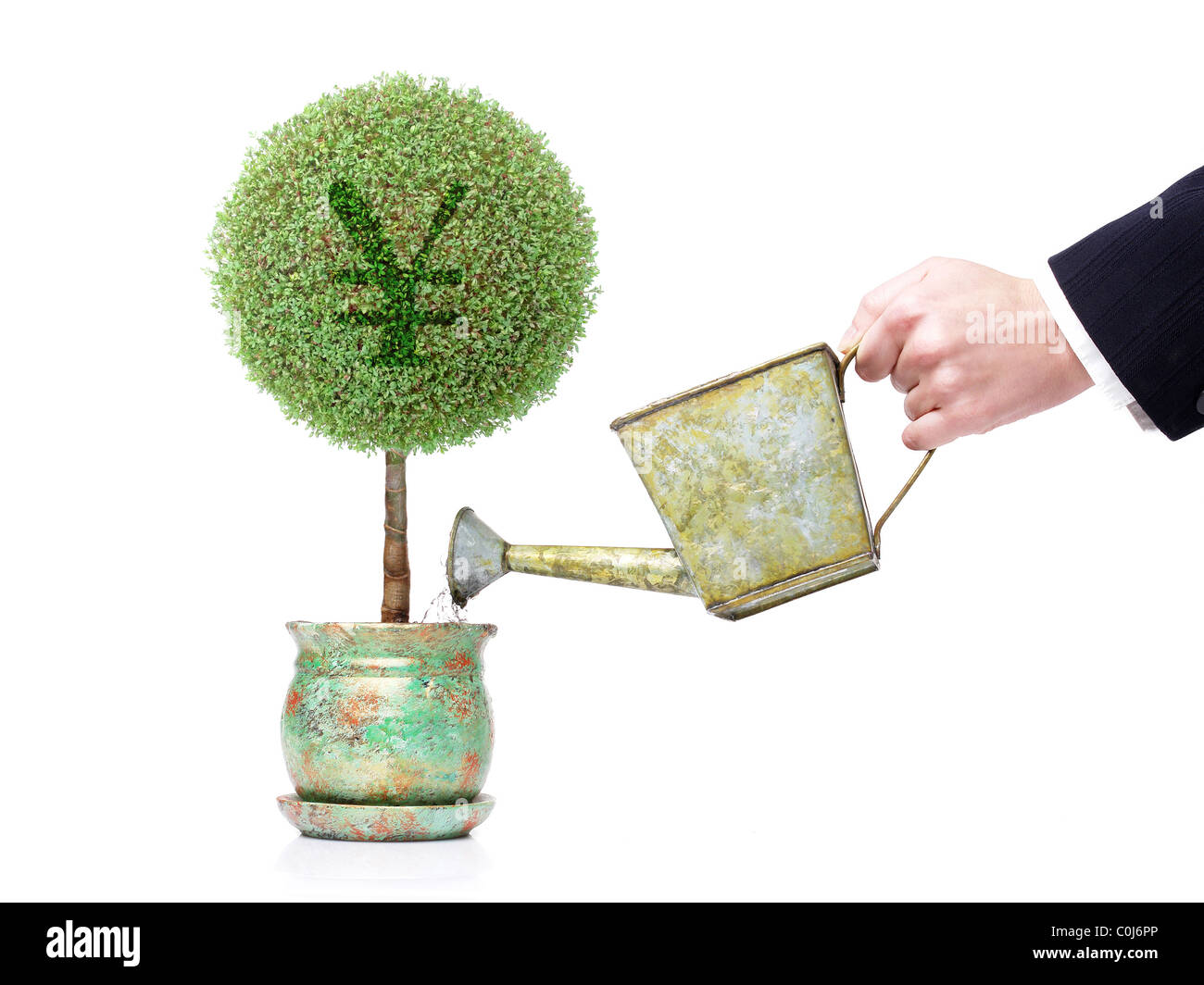 Businesswoman hand watering a pot tree with Yen symbol with metal water can over white background - Stock Image