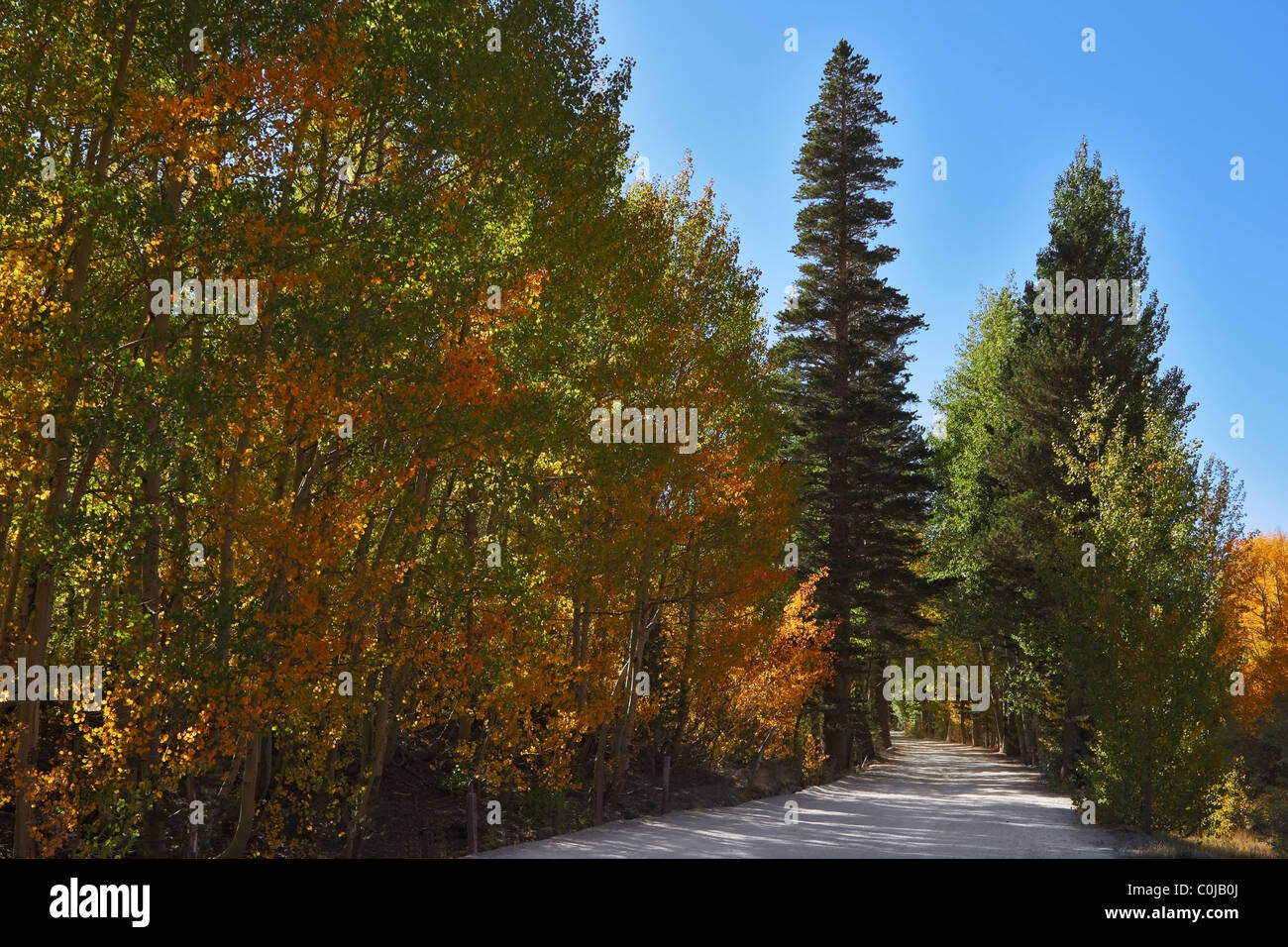 Nice trail in the mountain park - Stock Image