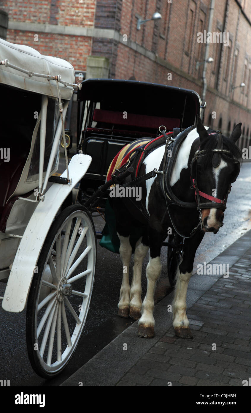 Sad-looking Dublin carriage horse, Guinness Brewery, Dublin, Ireland - Stock Image