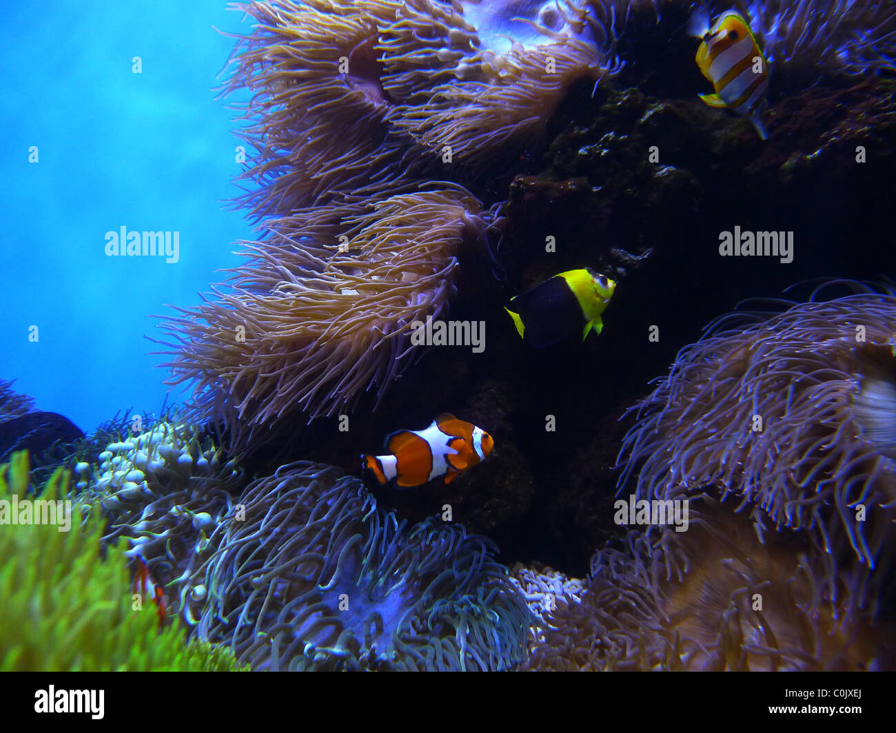 Waikiki Aquarium, Honolulu, Oahu, Hawaii - Stock Image