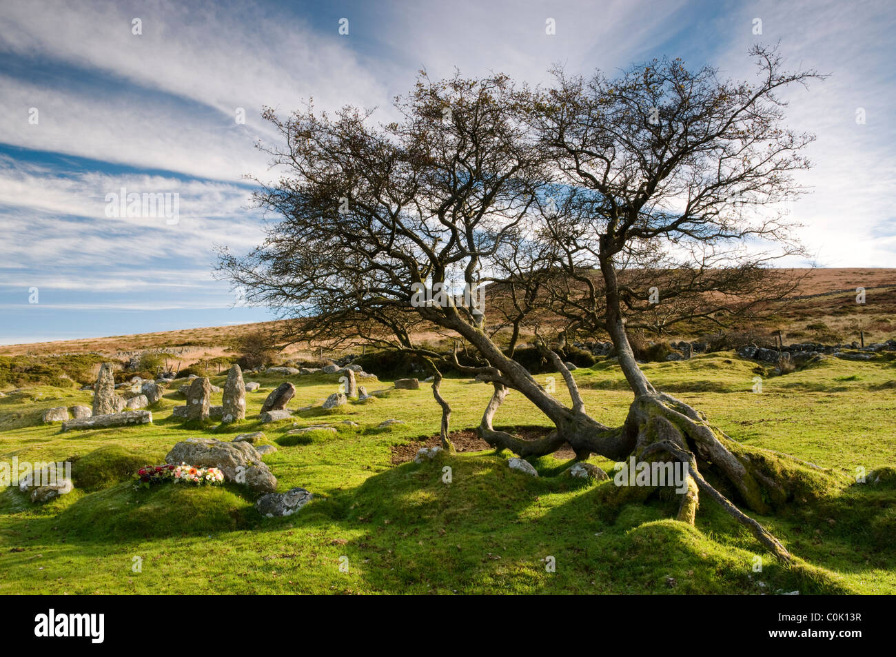 Rocks and Hawthorn Tree near Cold East Cross, Rippon Tor, Dartmoor - Stock Image