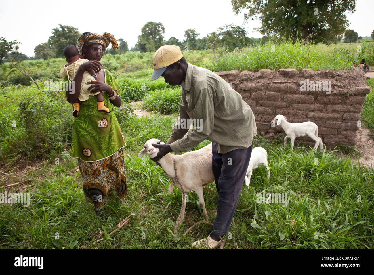 A family of farmers tend to their sheep in Safo, Mali, West Africa. - Stock Image