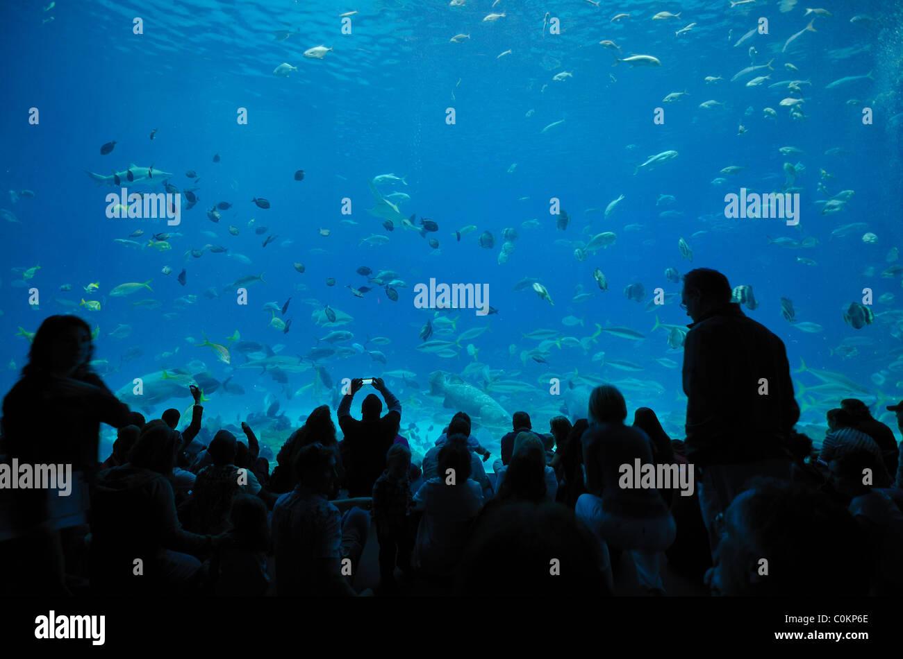 The Georgia Aquarium, the world's largest aquarium, in Atlanta, Georgia - Stock Image