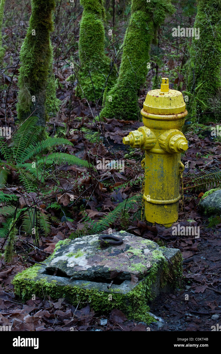Fire Hydrant located in a forest - Stock Image