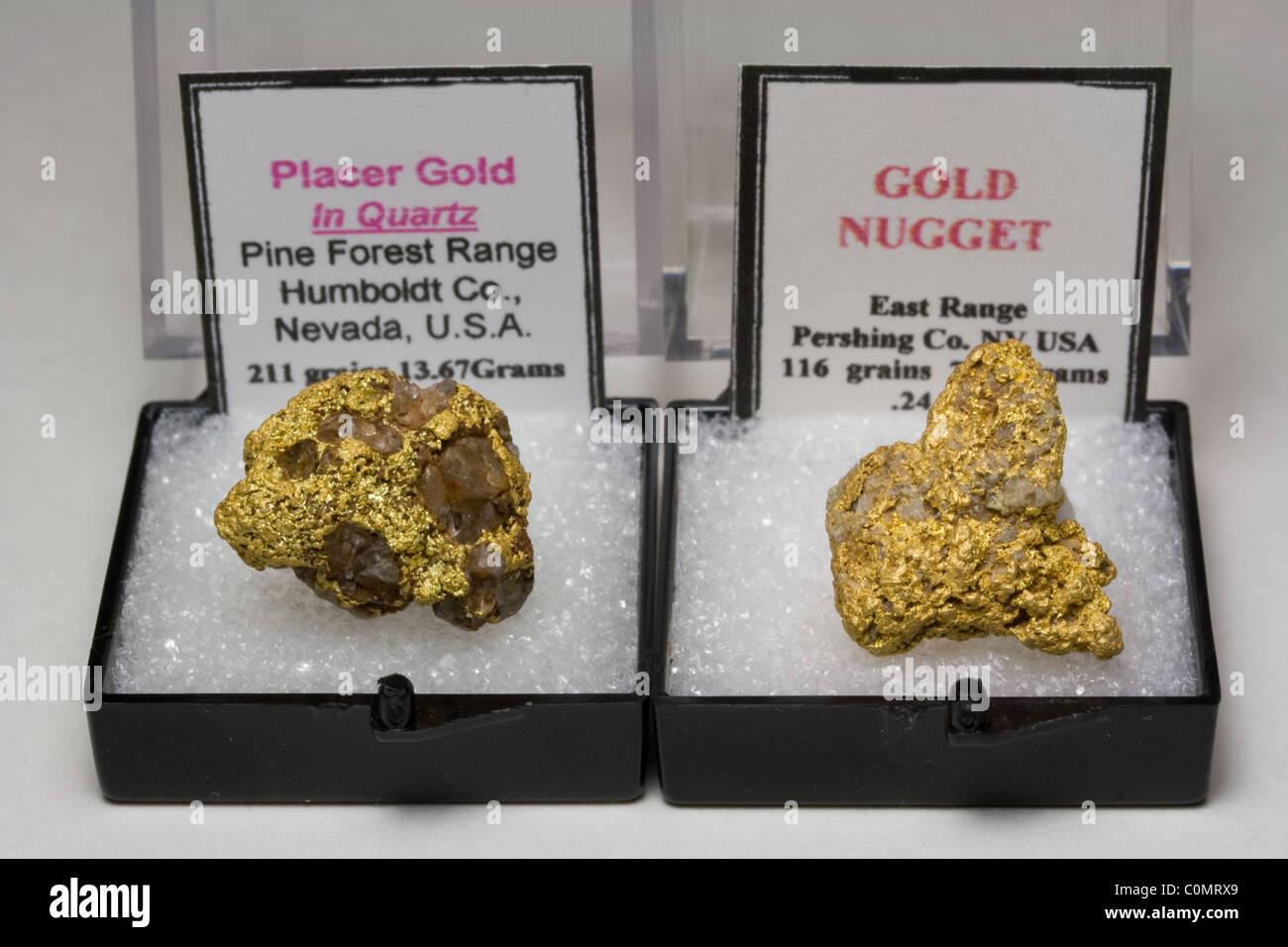 Natural Gold Nuggets - Nevada USA - Stock Image