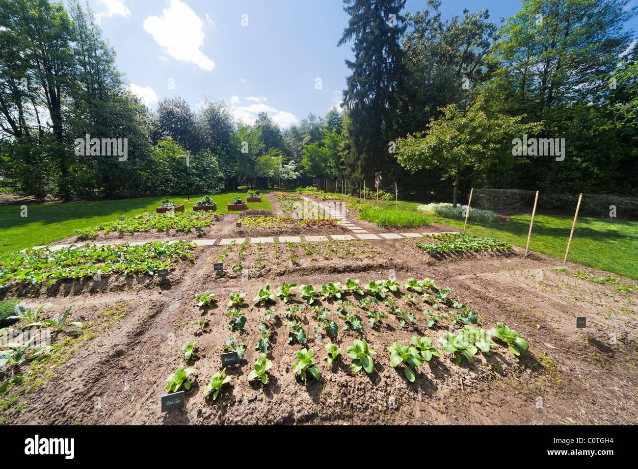 Michelle Obama's organic Kitchen Garden of The White House in spring. Washington DC. Bok Choi; Broccoli, Kohlrabi, - Stock Image