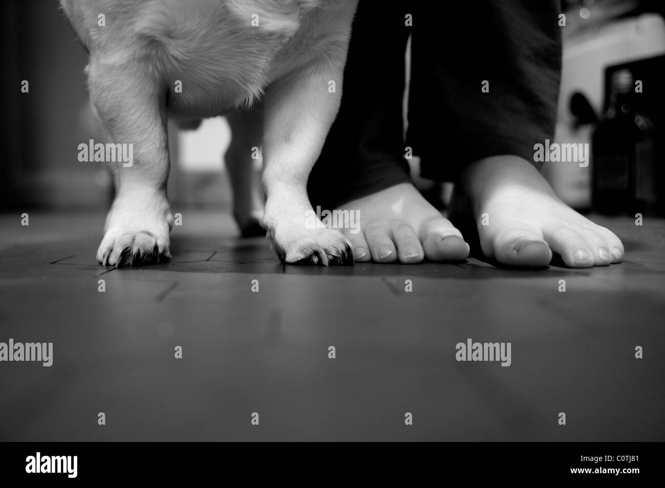Paws And Feet Jack Russell Paws And A Little Boys Feet Stock Photo