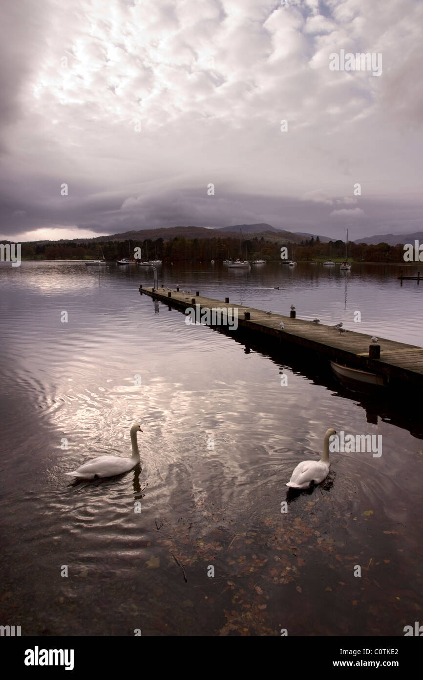 Cloudy sky reflections, swans and boat jetty on Lake Windermere, Ambleside, Lake District, Cumbria, England, UK - Stock Image