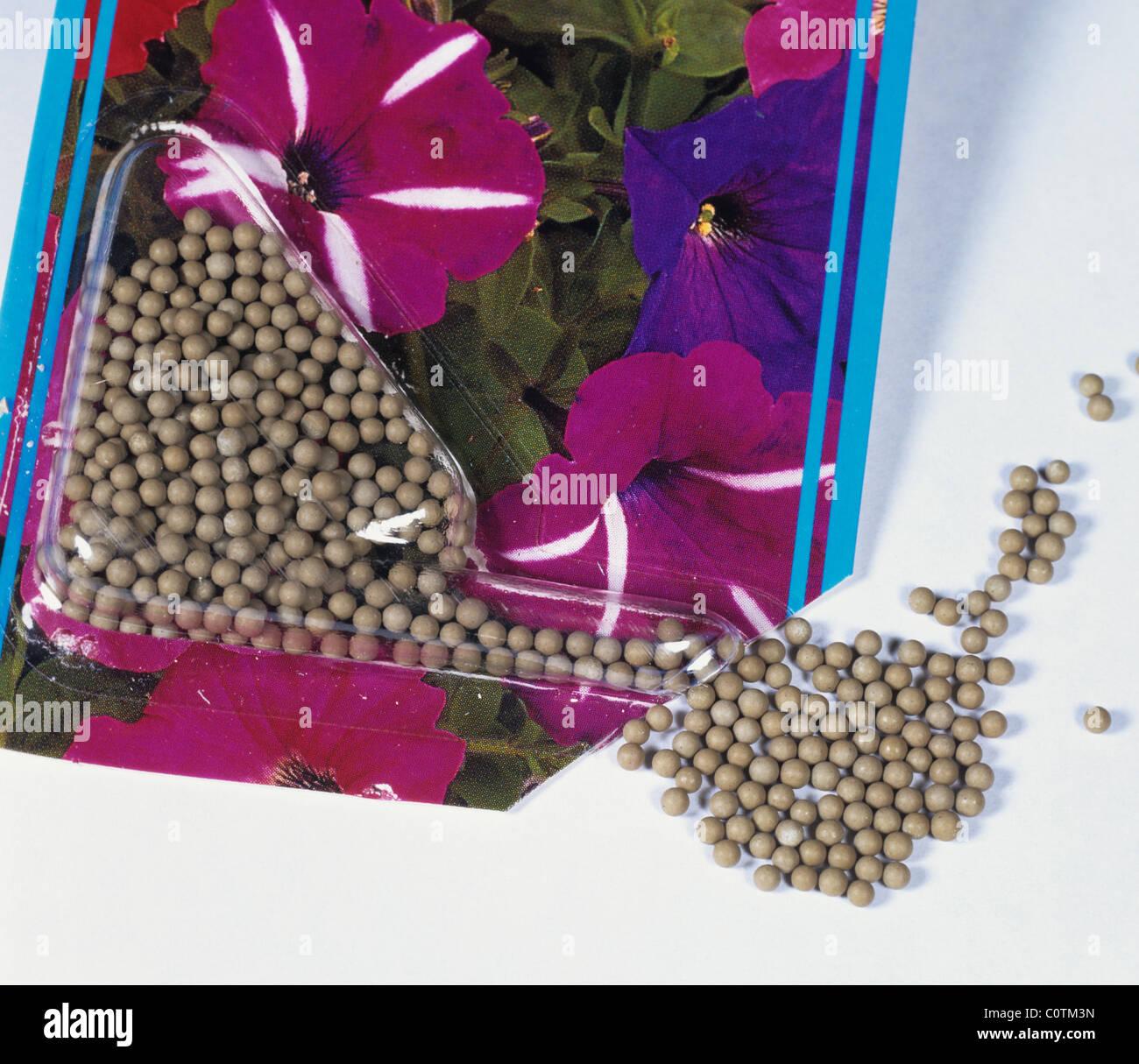 A packet of pelleted seeds Petunia multiflora - Stock Image