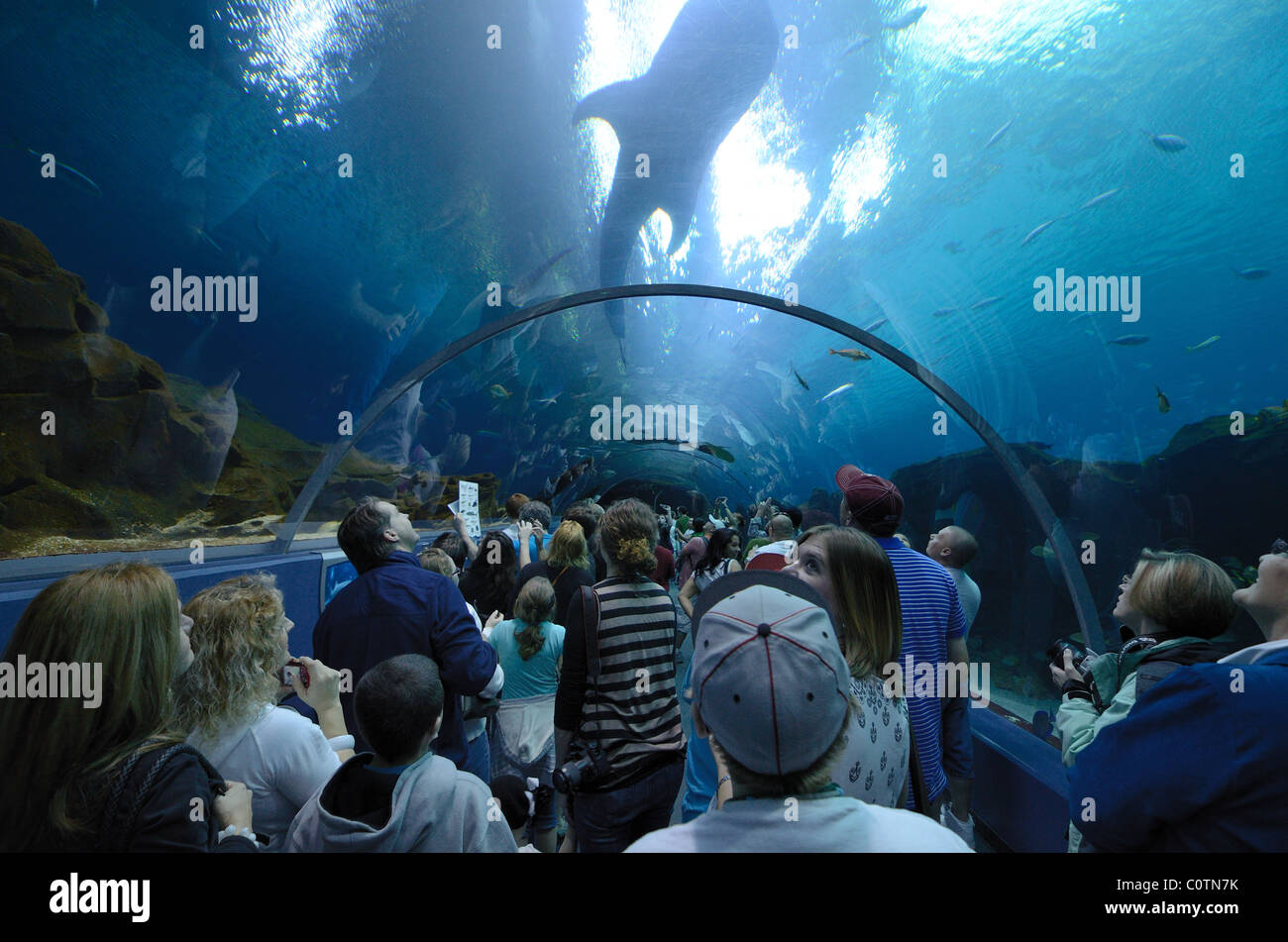 The Georgia Aquarium, the world's largest aquarium, in Atlanta, Georgia. February 20, 2011. - Stock Image