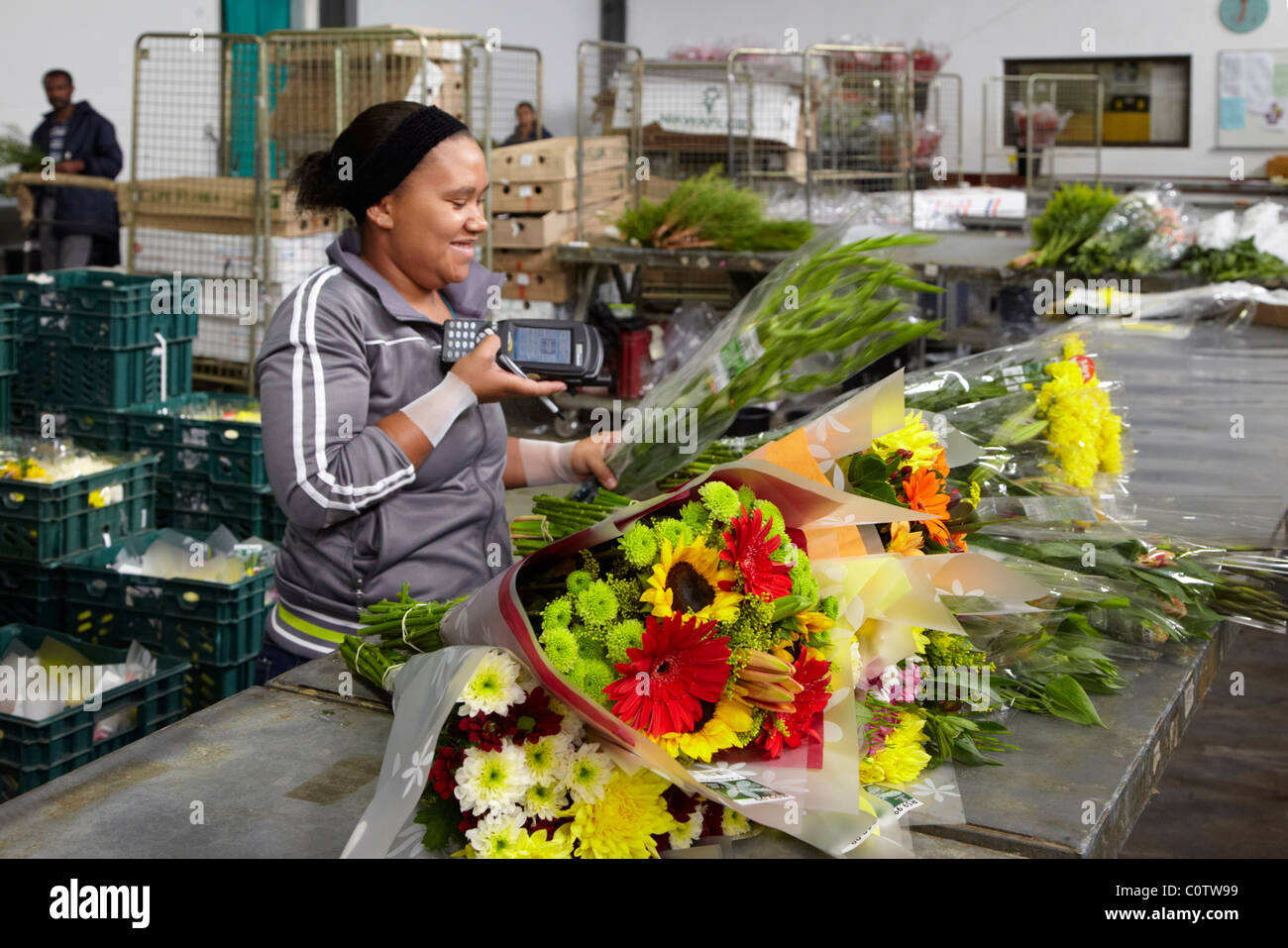 Reading barcode on bunch of flowers in the despatch department of Oak Valley Flowers. Elgin, Western Cape, South - Stock Image