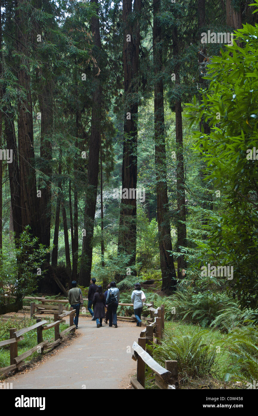 People walking through redwoods at Muir Woods National Monument, California - Stock Image