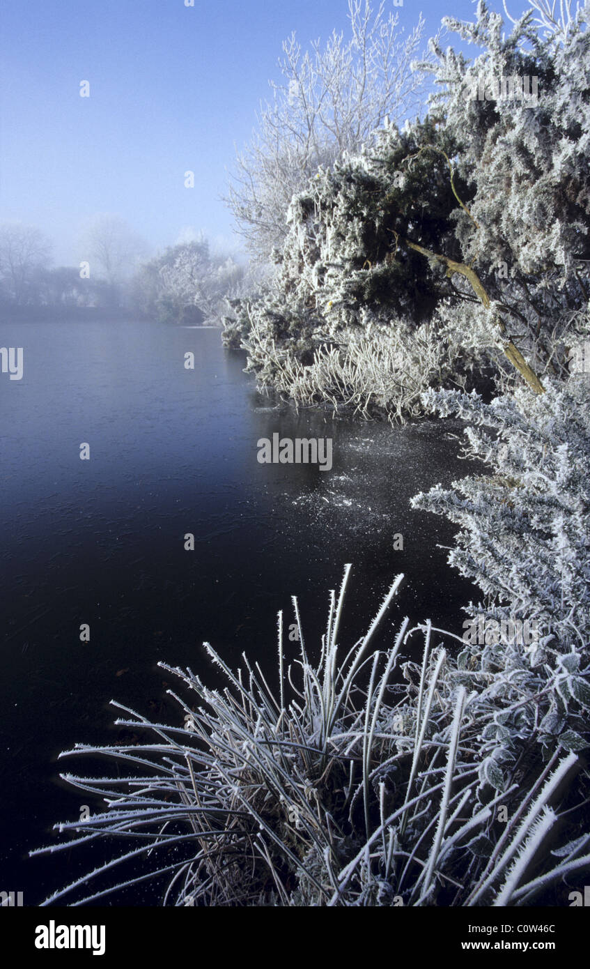 The hoar-frost covered trees growing on the bank of fishing pond in Barby, Warwickshire, UK. Stock Photo