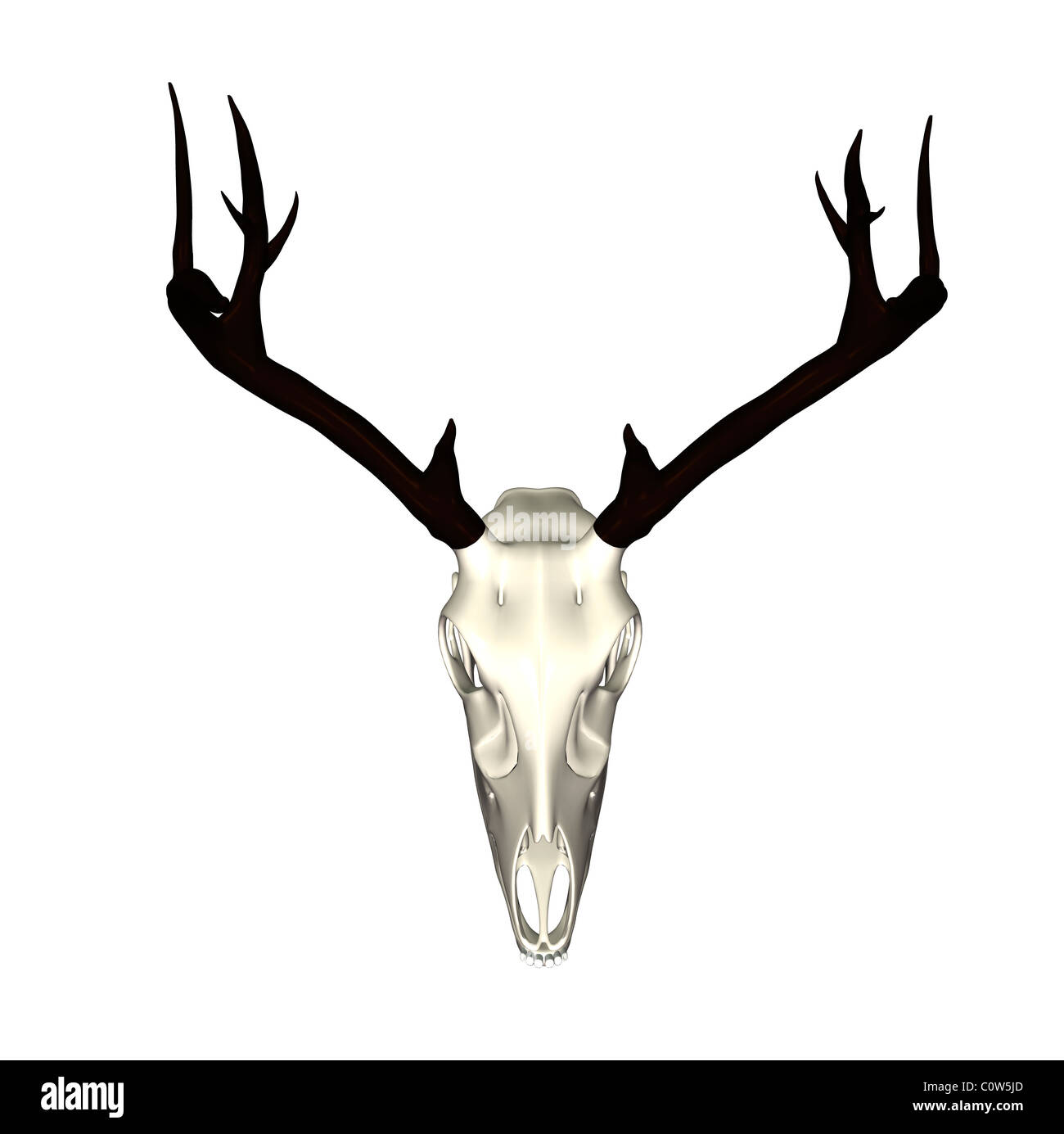 Deer Antlers Cut Out Stock Images & Pictures - Alamy