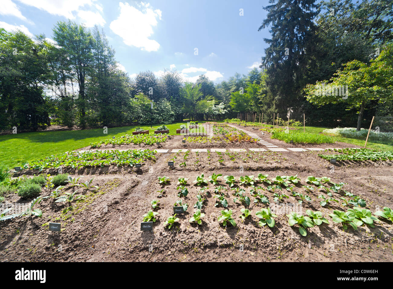 Michelle Obama's organic Kitchen Garden of The White House in spring. Washington DC. Bok Choi; Broccoli, Kohlrabi, - Stock Image