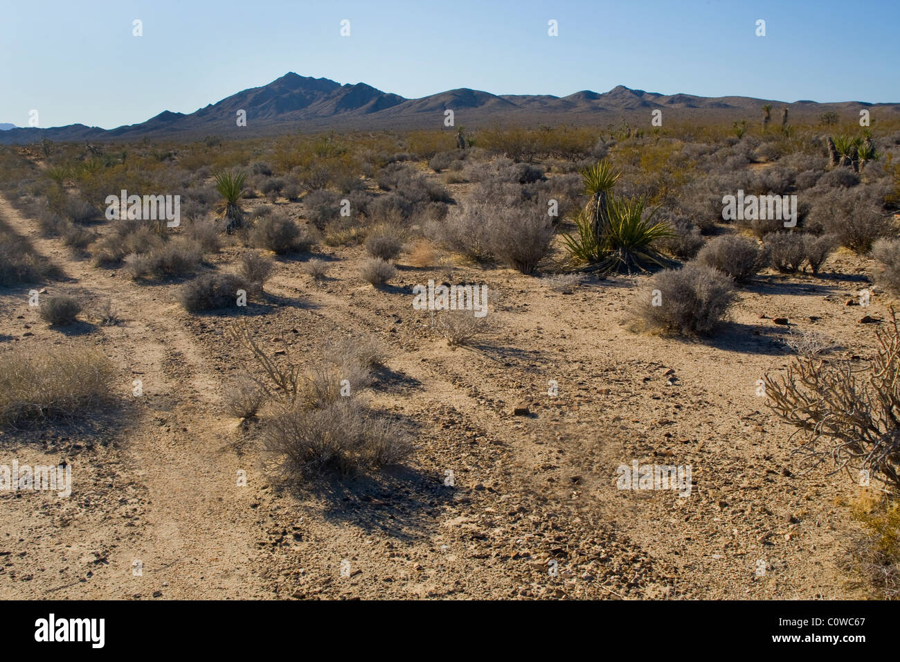 Tracks through the landscape of the Mojave Desert in California. - Stock Image