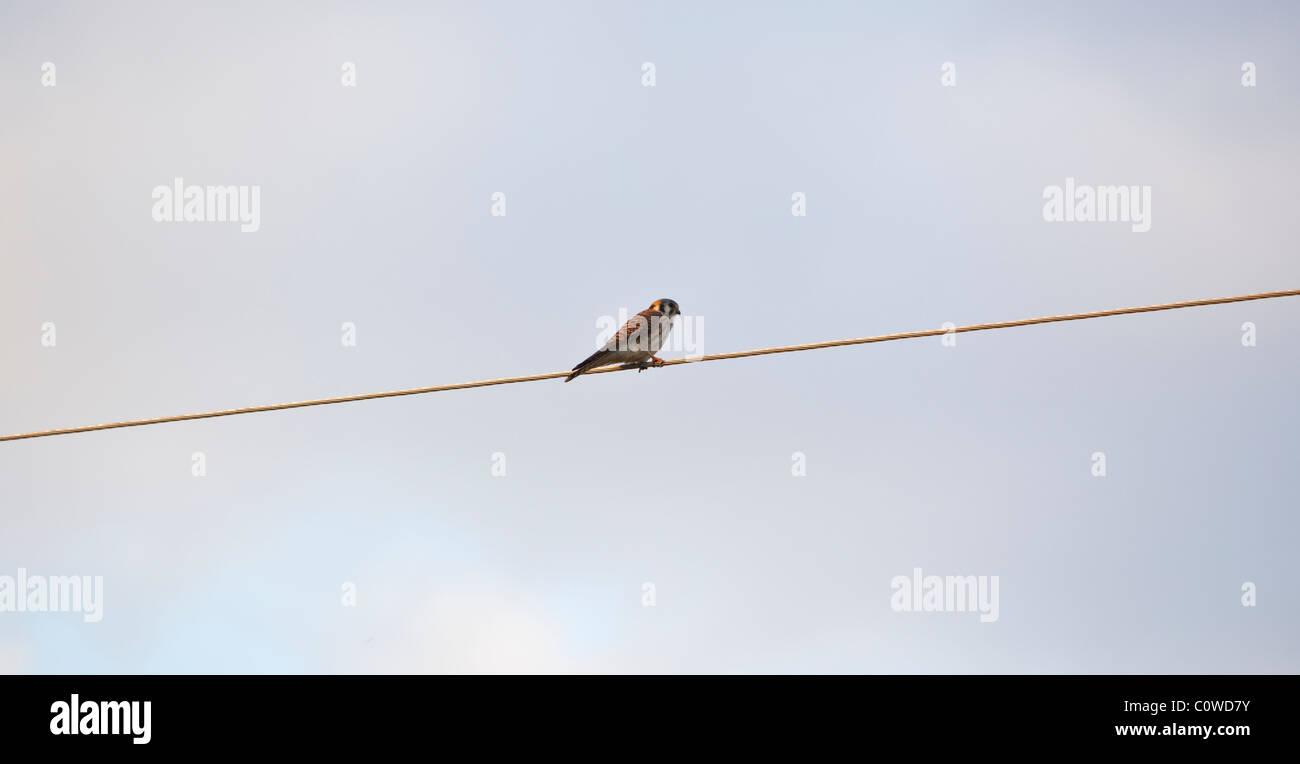 Bird On A Wire Stock Photo 34979951 Alamy