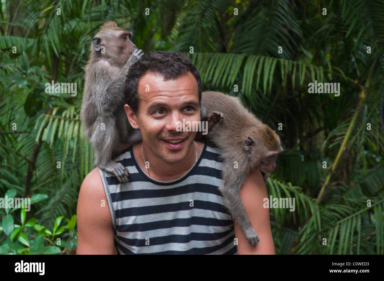 Tourists with long-tailed macacques in the Monkey Forest in Ubud Bali Indonesia - Stock Image