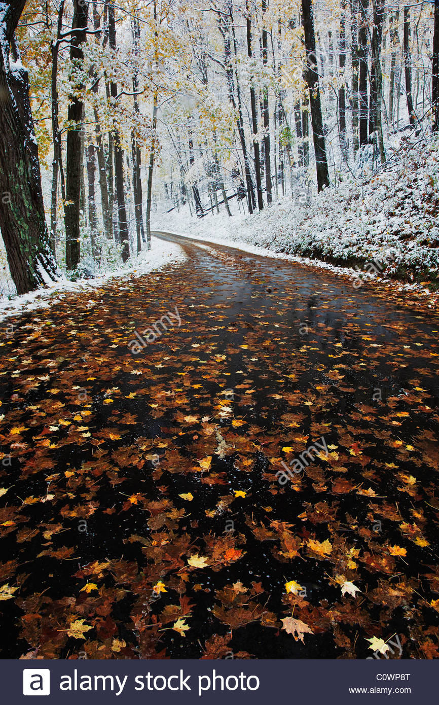 Early Snow fall along Roaring Fork Motor Nature Trail in the Great Smoky Mountains National Park - Stock Image