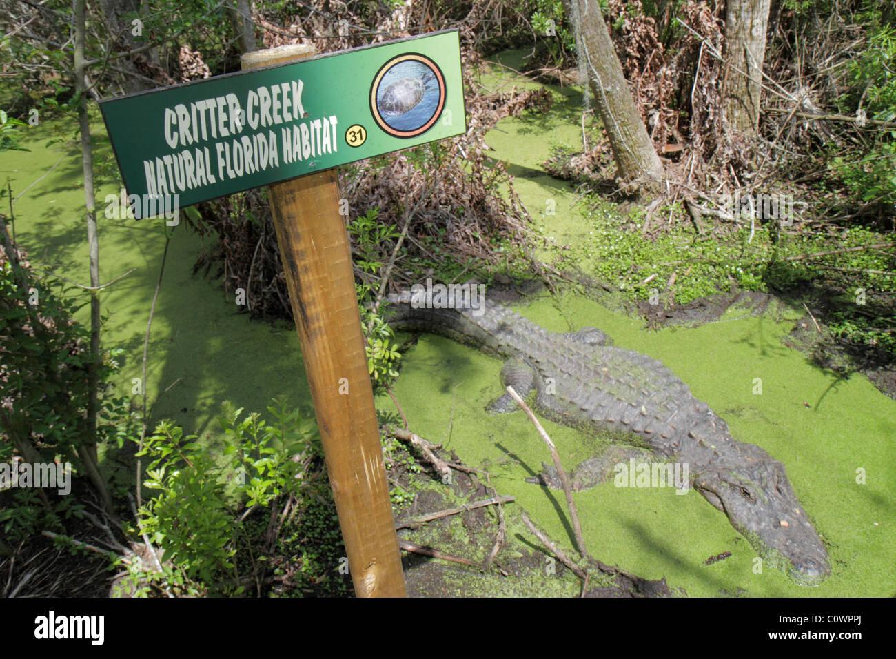 Orlando Florida Christmas Jungle Adventure Nature Park & and Zoo natural habitat sign alligator sunning - Stock Image
