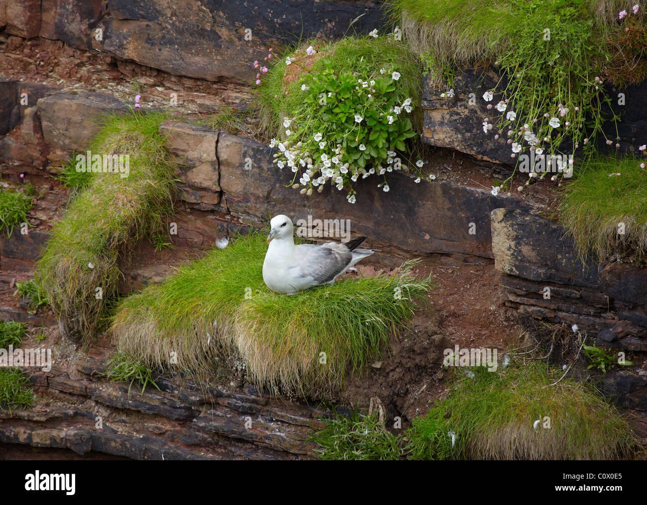 Birds rookery - Stock Image