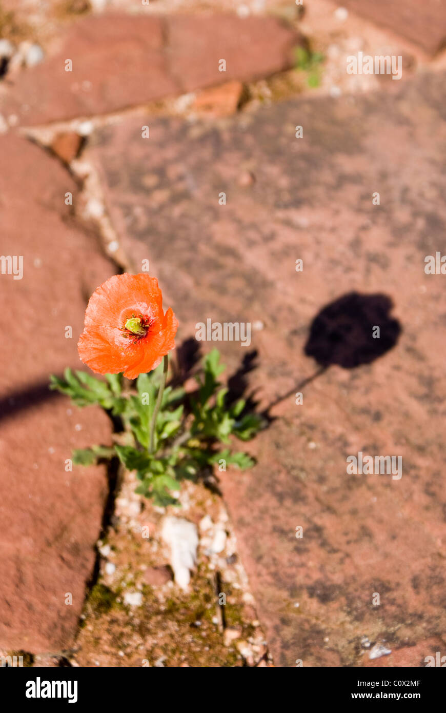 Flower growing through stones in a castle. - Stock Image