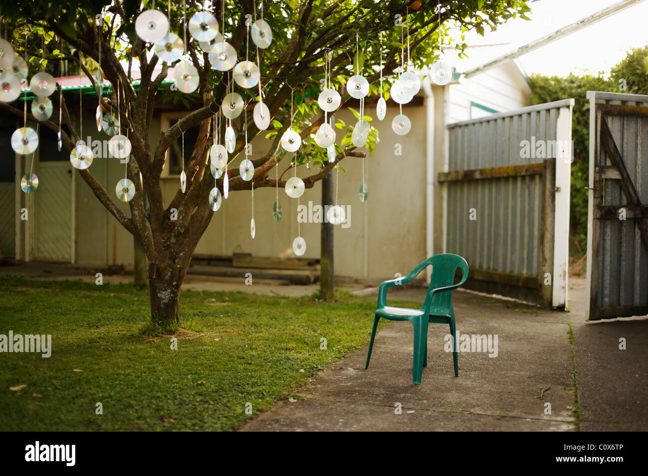 CDs hanging from tree - Stock Image